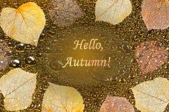 De herfstkader met bladeren, waterdruppeltjes en de herfst van teksthello Royalty-vrije Stock Foto's
