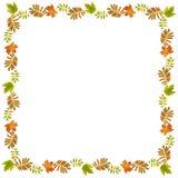 De herfstkader met droge bladeren Royalty-vrije Stock Fotografie