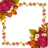 De herfstkader met droge bladeren en van asterbloemen boeketten Stock Afbeelding