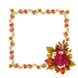 De herfstkader met droog bladeren en van asterbloemen boeket Stock Foto's