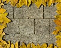 De herfstkader met gele bladeren Royalty-vrije Stock Fotografie