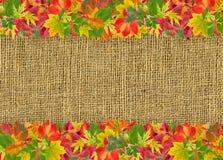 De herfstkader met kleurrijke bladeren Stock Foto's