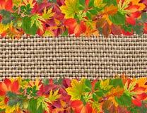 De herfstkader met kleurrijke bladeren Royalty-vrije Stock Fotografie