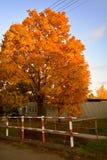 De herfstkastanje stock afbeeldingen