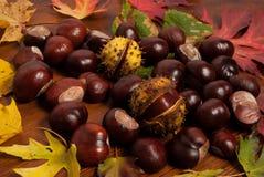 De herfstkastanjes Stock Fotografie