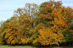 De herfstkleur Stock Afbeelding