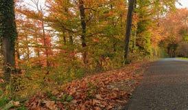 De herfstkleur in bos bij zonsondergang Royalty-vrije Stock Foto