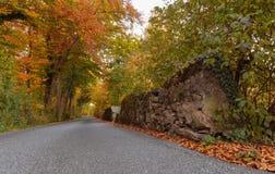 De herfstkleur in bosch Stock Afbeeldingen