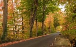 De herfstkleur in boszwitser Stock Afbeelding