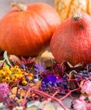 De herfstkleur, installaties met erachter pompoenen stock foto's