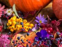 De herfstkleur, installaties met erachter pompoenen royalty-vrije stock fotografie