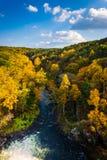 De herfstkleur langs de Buskruitrivier van Prettyboy-Dam i wordt gezien die Stock Fotografie
