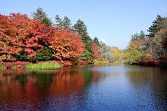 De herfstkleur van vijver Stock Fotografie