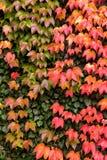 De herfstkleuren Stock Fotografie