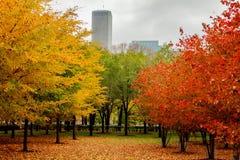 De herfstkleuren in Chicago stock afbeeldingen