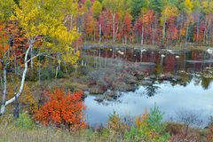 De herfstkleuren - dalingsbladeren in Adirondacks, New York stock foto