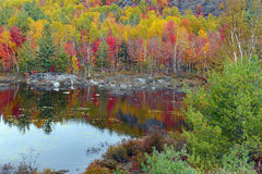 De herfstkleuren - dalingsbladeren in Adirondacks, New York royalty-vrije stock afbeelding