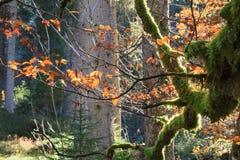 De herfstkleuren in de Alpen Stock Foto's