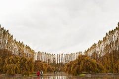 De herfstkleuren in Duitsland Stock Afbeeldingen