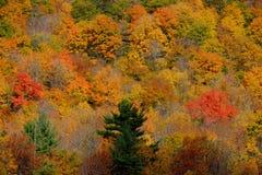 De herfstkleuren in een bergbos Stock Afbeelding