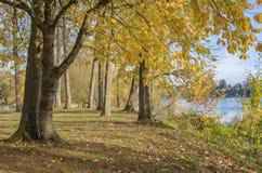 De herfstkleuren in een park Oregon Stock Foto's