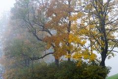 De herfstkleuren en berken Stock Afbeeldingen
