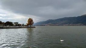 De herfstkleuren en een zwaan royalty-vrije stock foto's