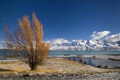 De herfstkleuren en verse sneeuw op Meer Pukaki, Nieuw Zeeland Stock Afbeeldingen