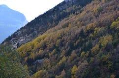De herfstkleuren in de gemengde bossen van posets-Maladeta Natuurreservaat, de Spaanse Pyreneeën stock afbeelding