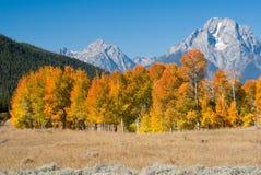 De herfstkleuren in Grote Tetons Stock Foto's