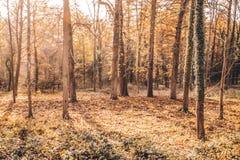 De herfstkleuren in het Belgische platteland Stock Foto's