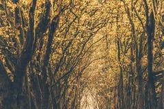 De herfstkleuren in het Belgische platteland Royalty-vrije Stock Foto