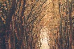 De herfstkleuren in het Belgische platteland Royalty-vrije Stock Afbeelding