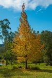 De herfstkleuren in het platteland Stock Fotografie