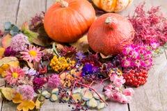 De herfstkleuren, installaties met pompoenen stock fotografie