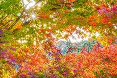 De herfstkleuren in Korankei royalty-vrije stock foto's