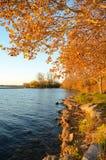 De herfstkleuren langs het meer Stock Fotografie