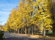 De herfstkleuren in Noordelijk Italië Royalty-vrije Stock Afbeelding