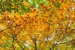De herfstkleuren op bladeren Royalty-vrije Stock Foto
