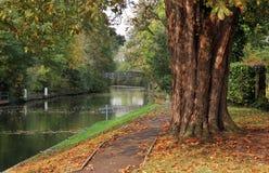 De herfstkleuren op de rivier Theems in Engeland Stock Fotografie
