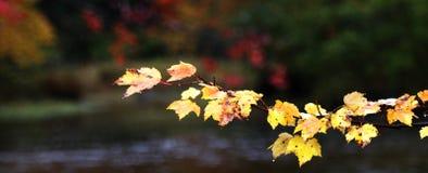 De herfstkleuren over een sream Stock Afbeeldingen
