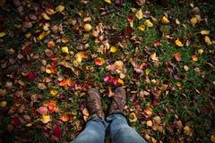 De herfstkleuren in platteland 2 Stock Afbeeldingen