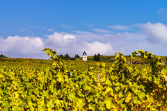De herfstkleuren van alsacien wijngaarden, Frankrijk Stock Foto's
