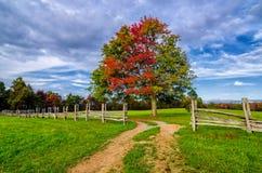 De herfstkleuren van de Hensleyregeling Stock Foto's