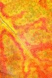 De herfstkleuren van dood blad Stock Afbeeldingen