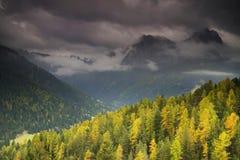 De herfstkleuren van het bos in Dolomietbergen Stock Foto