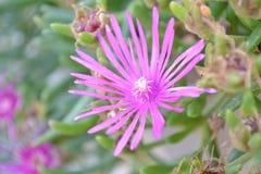 De Herfstkleuren van Koperslovenië Royalty-vrije Stock Afbeelding