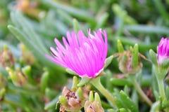 De Herfstkleuren van Koperslovenië Stock Foto's