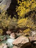 De de herfstkleuren versieren de Maagdelijke Rivier in Zion National Park Stock Foto