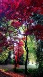 De herfstkleuren in Volkspark Enschede Stock Afbeelding